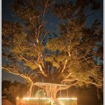 A small temple under a banyan trees in the evening lit up with lamps