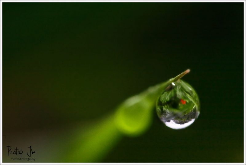 Close up of a Dew Drop
