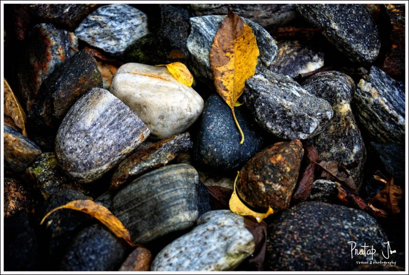 A close up of leaves and pebbles near a river side