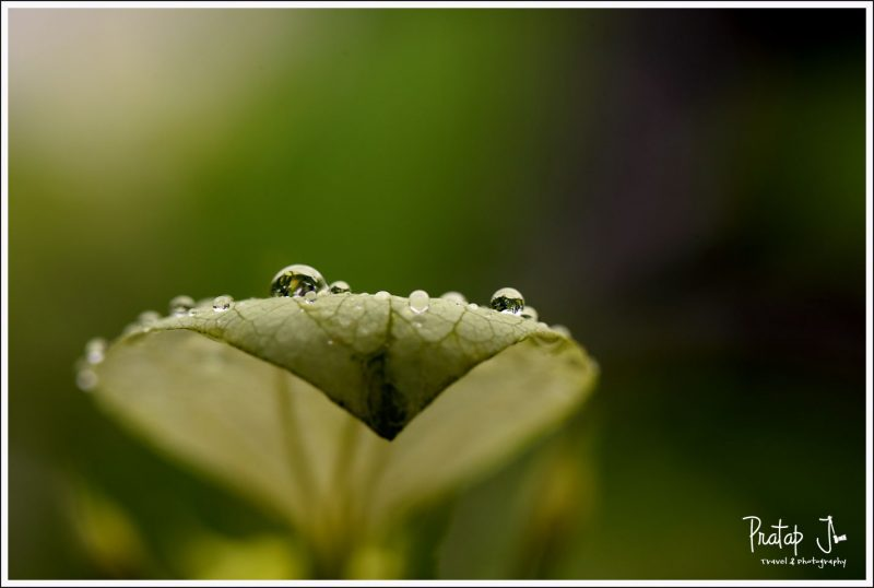 Dew drops after monsoon on a leaf photographed with a Canon 100mm L lens
