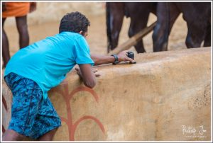 Capturing a Kambala with an action camera