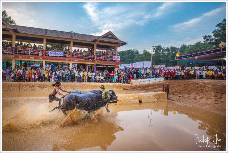 Kambala at Dakshina Canara