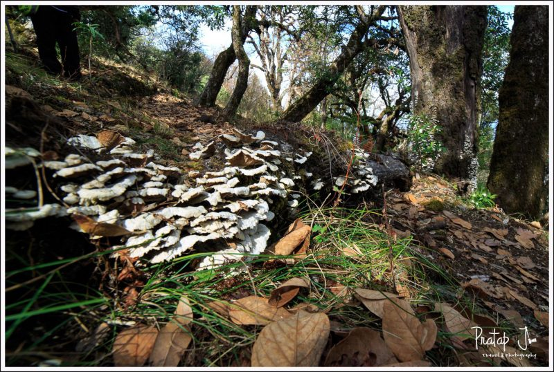 Fungi in the Himalayan forest