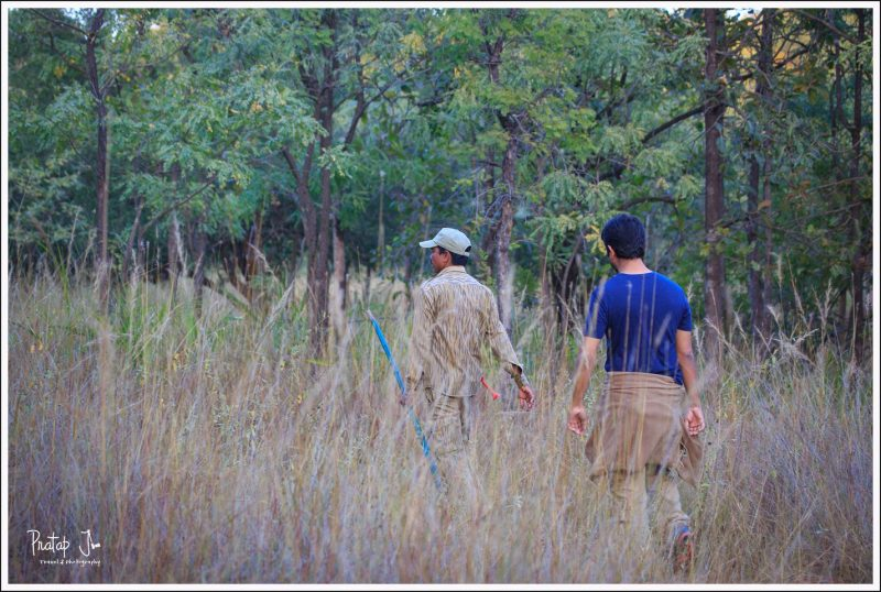 Jungle Walk in Satpura