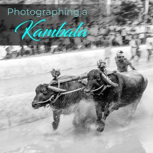 Photographing a Kambala (Buffalo Race)