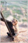 monkey chewing my tripod