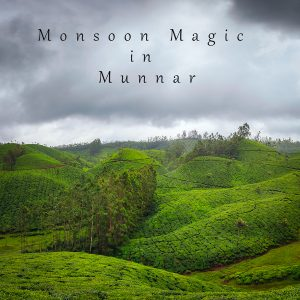 Monsoon Magic in Munnar