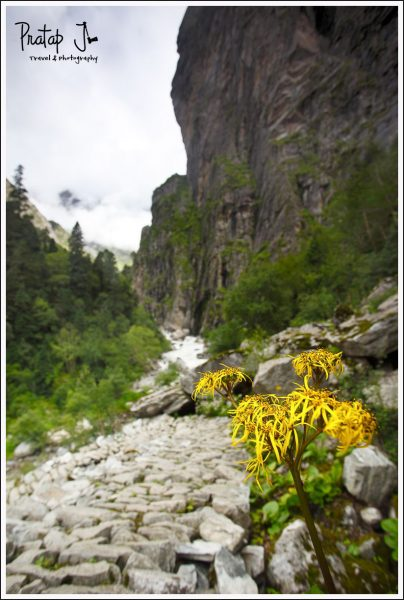 Trekking to the Valley of Flowers