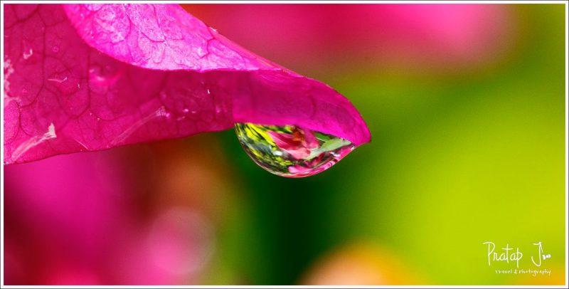 Waterdrop Macro Photography