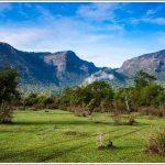 Green fields at Masinagudi