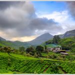 Tea gardens of Munnar shot during the Kannan Devan Tea competition
