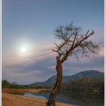 A lone tree beside a waterbody near Bangalore