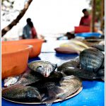 Fresh Catch at Kochi