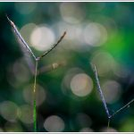 Beautiful bokeh captured with a Canon 100mm macro lens