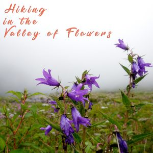 Trekking to Valley of Flowers (Uttarakhand)